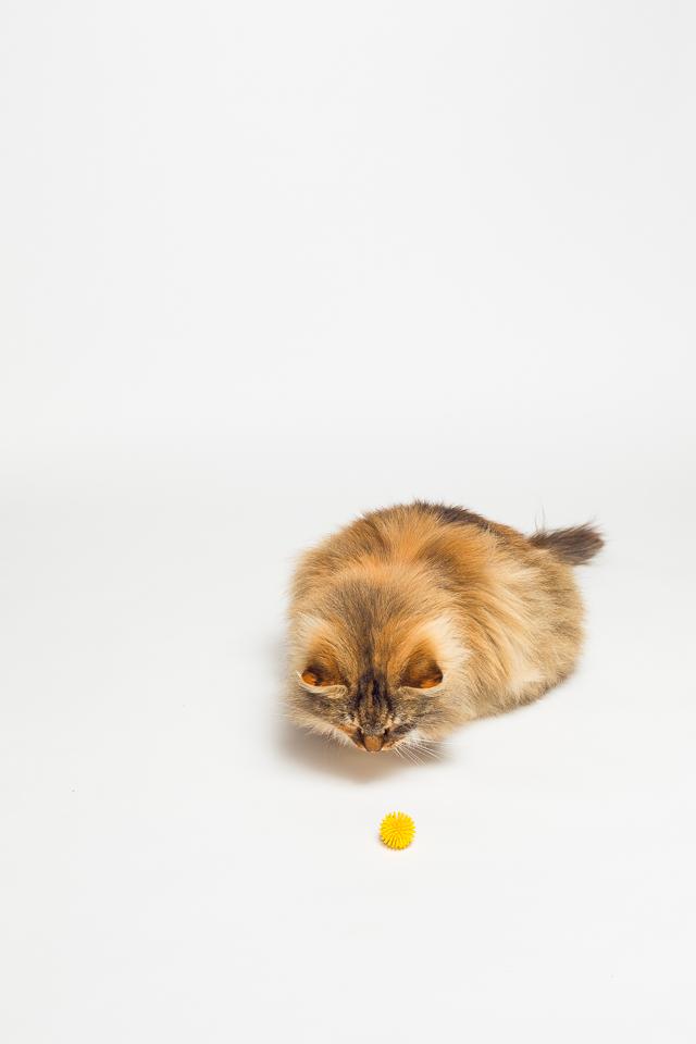Reina Wakefield RI pet photographer-1.jpg