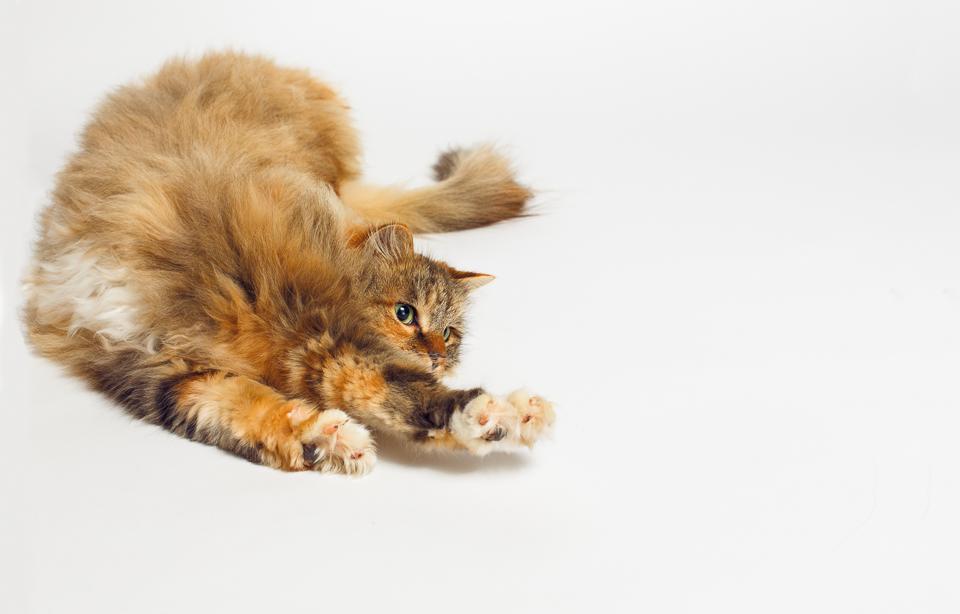 Reina Wakefield RI pet photographer-3.jpg
