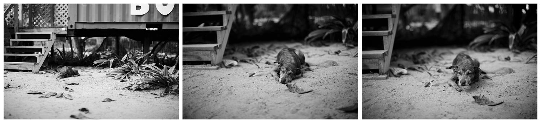 Amy Kristin Photography • Wakefield RI travel photographer