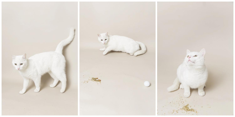 Amy Kristin Photography • Wakefield RI Pet Photographer
