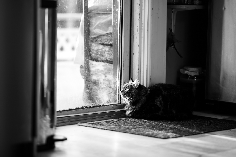 Cat sitting next to sliding glass door