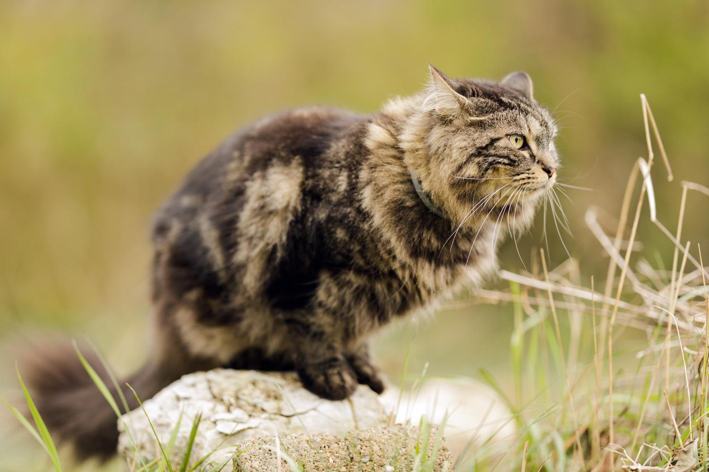 Cat on rock in Wakefield, RI