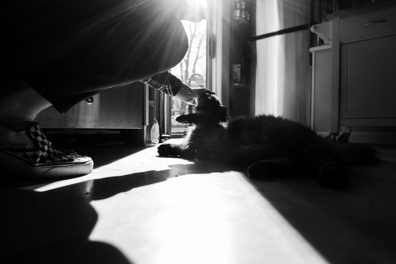Cat in kitchen in Wakefield, RI
