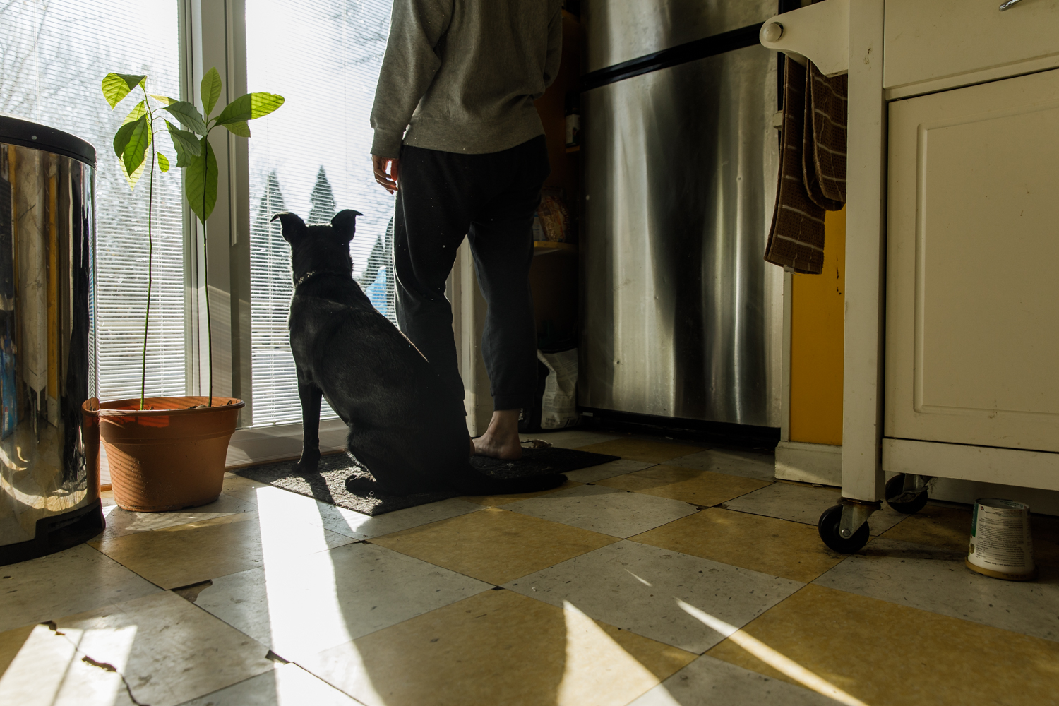 Dog and woman standing next to sliding glass door