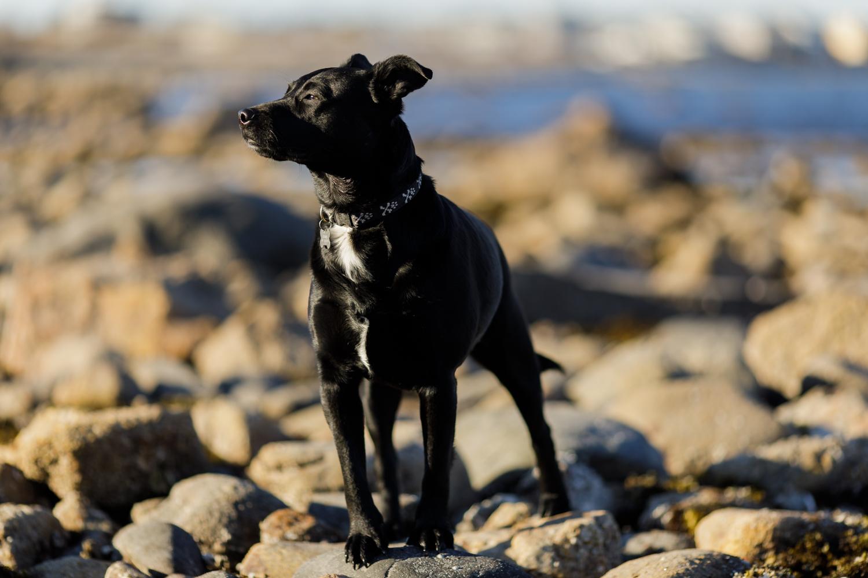 black dog on rocks