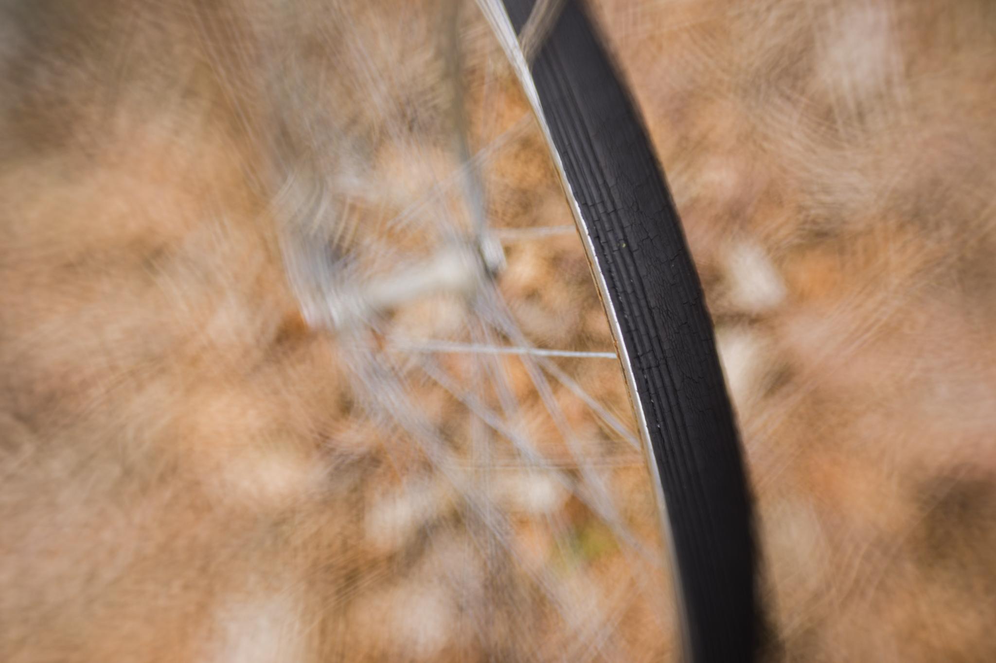 bicycle tire in backyard in Wakefield, RI