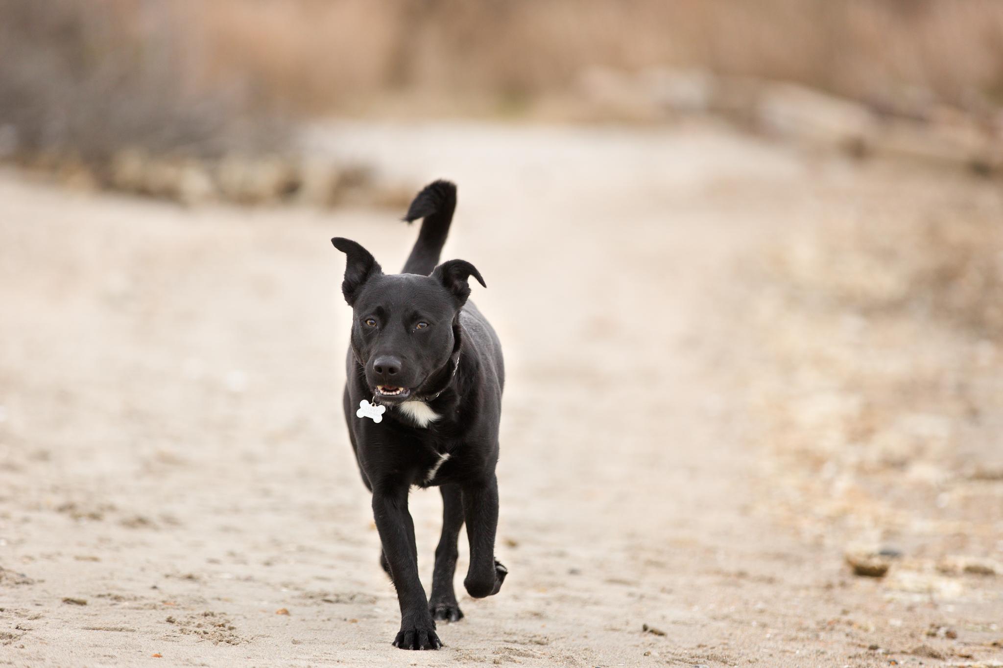 black dog on the bach in Jerusalem, RI