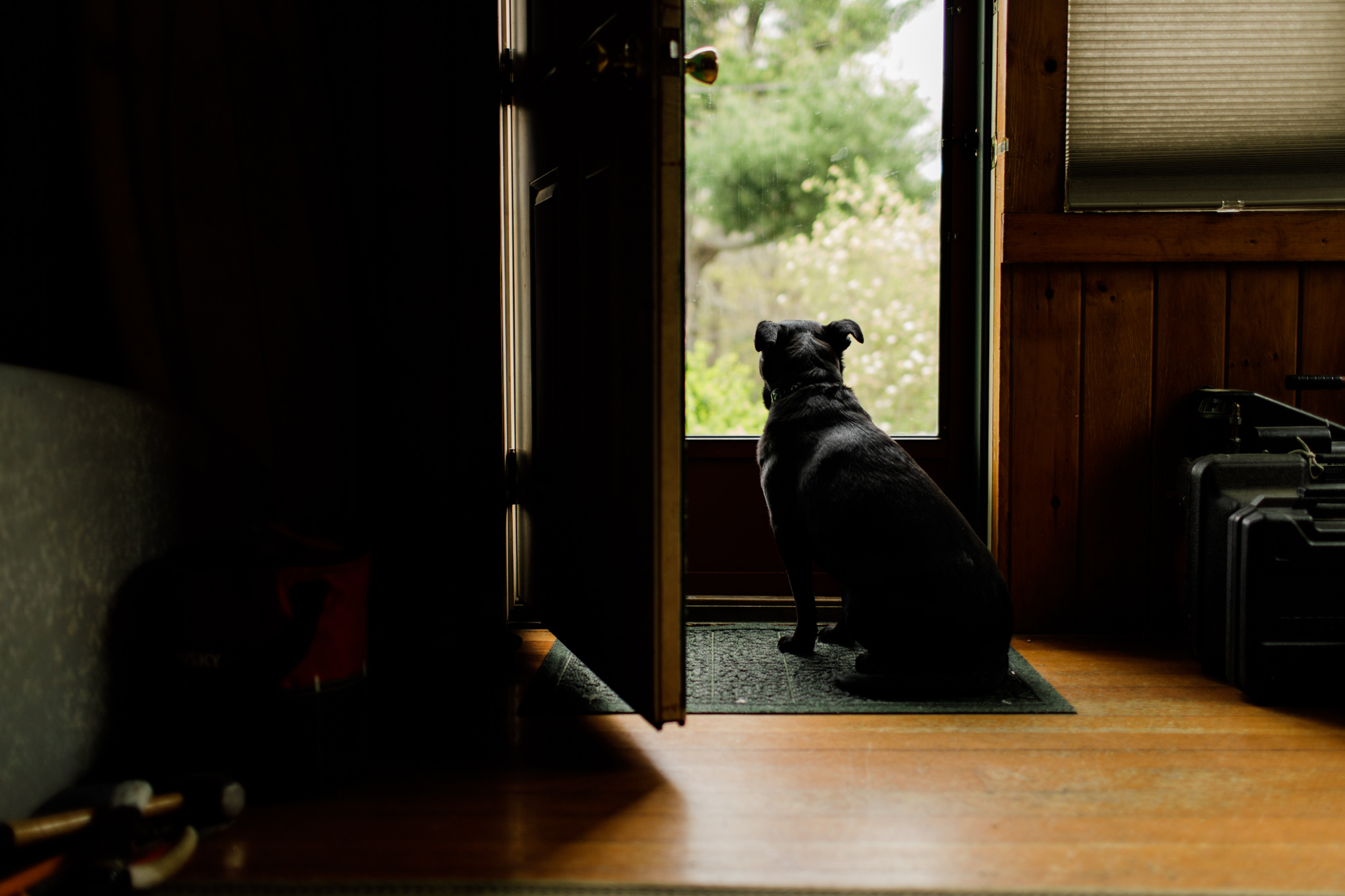 dog looking out front door