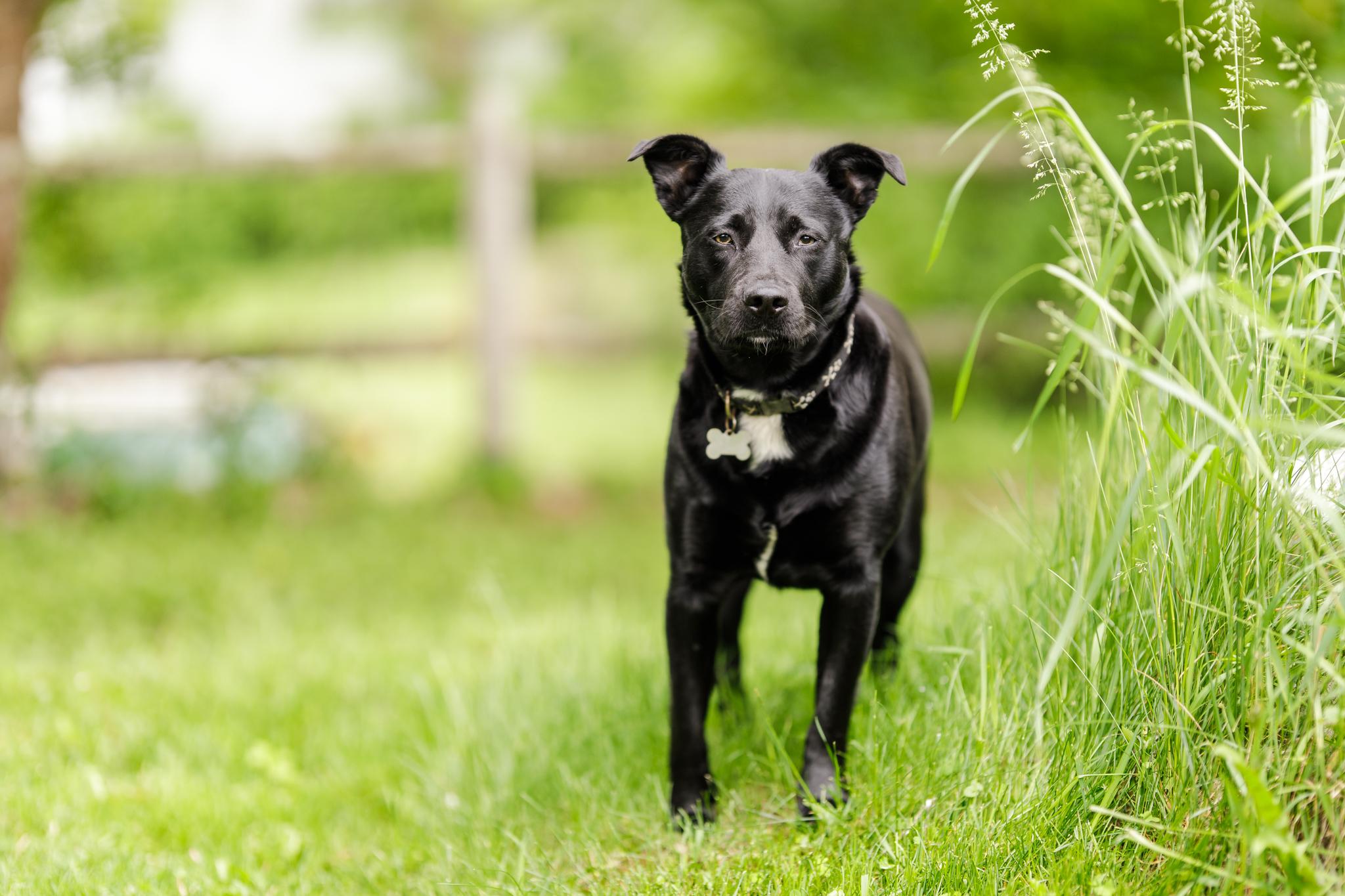 dog in backyard in Wakefield, RI