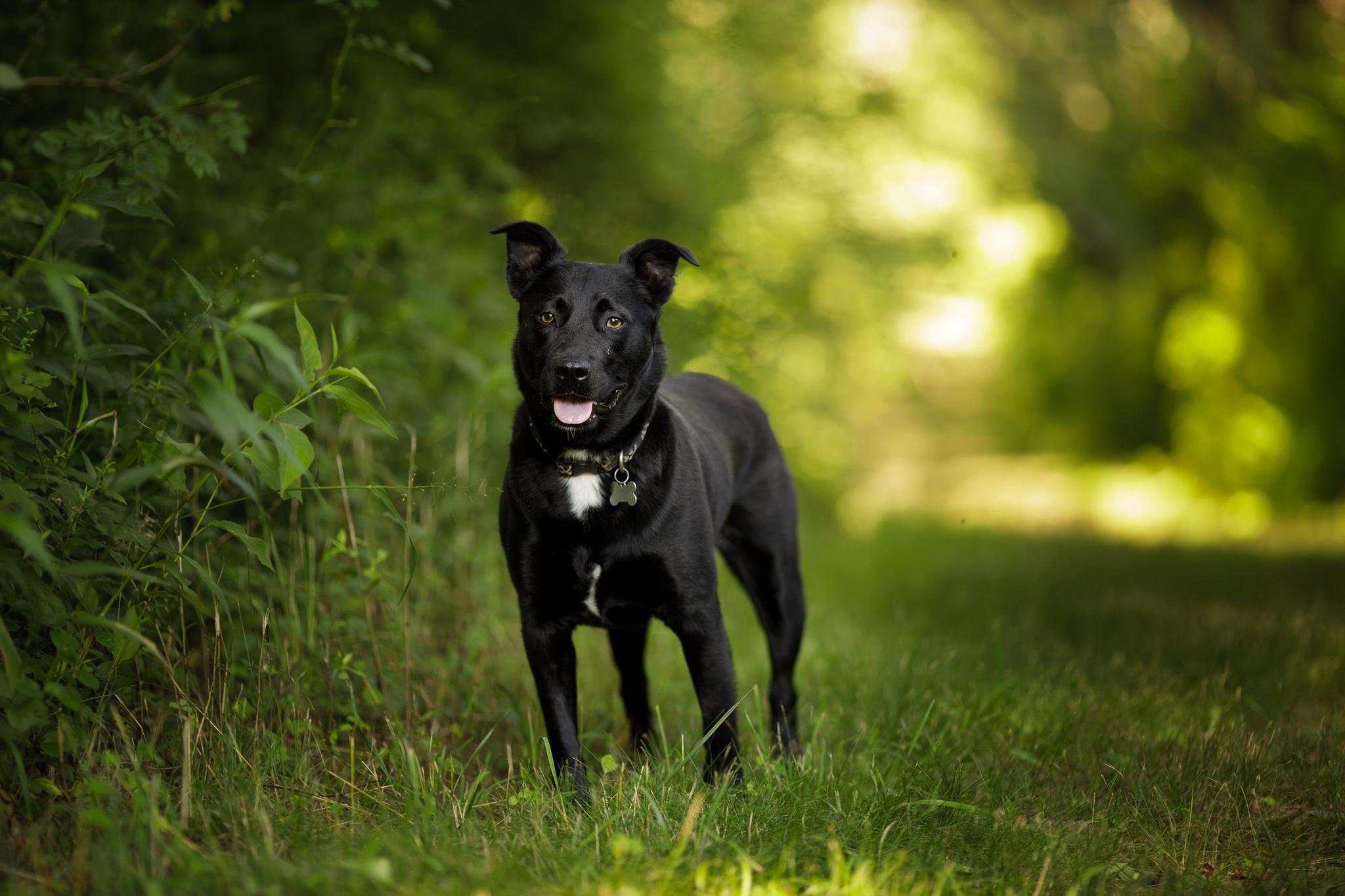 dog on a path in Wakefield, RI