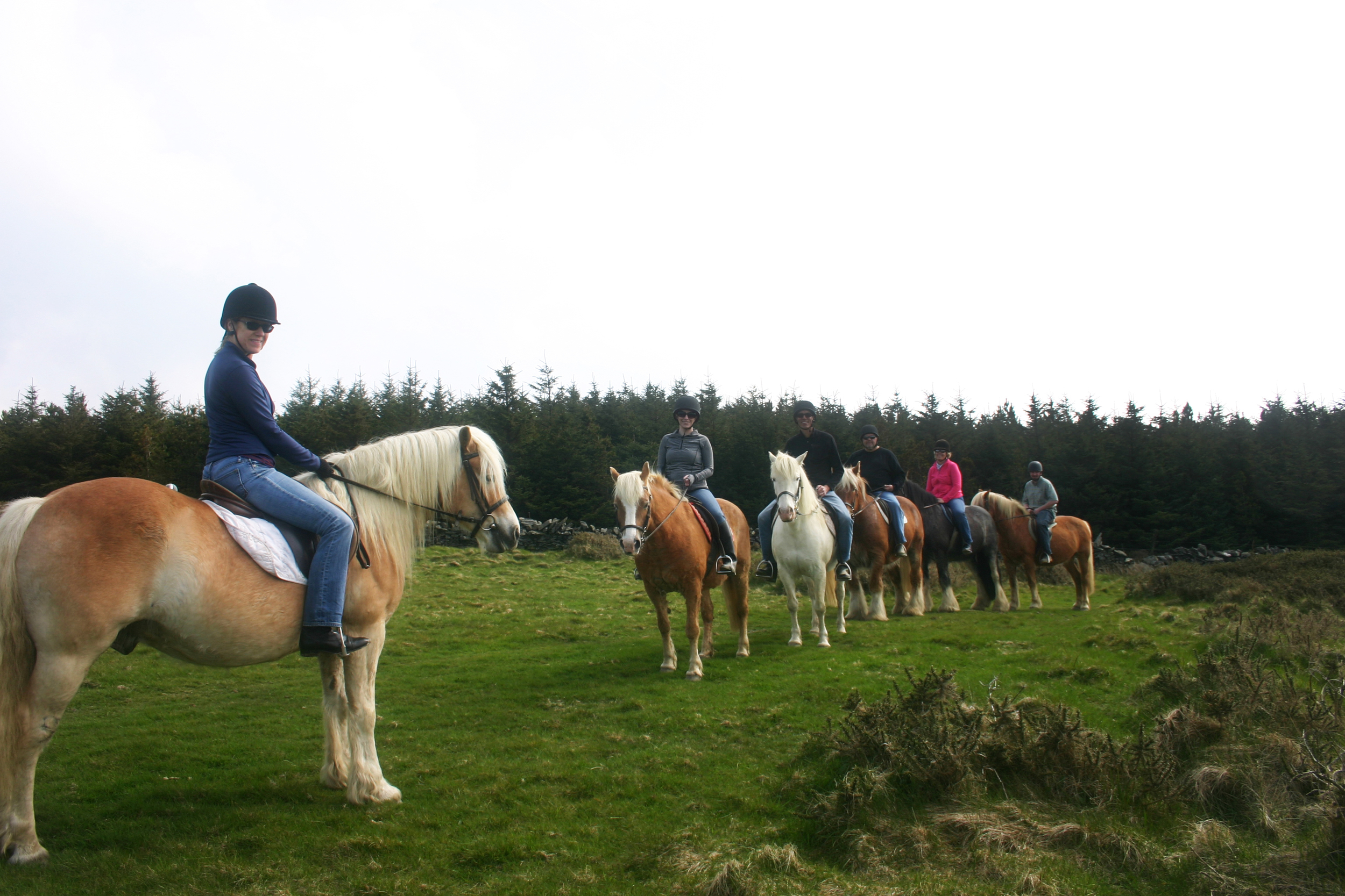 From left to right, the ponies are Whiskey, Patsy, Pickles, Humpty, Barney and Cody.