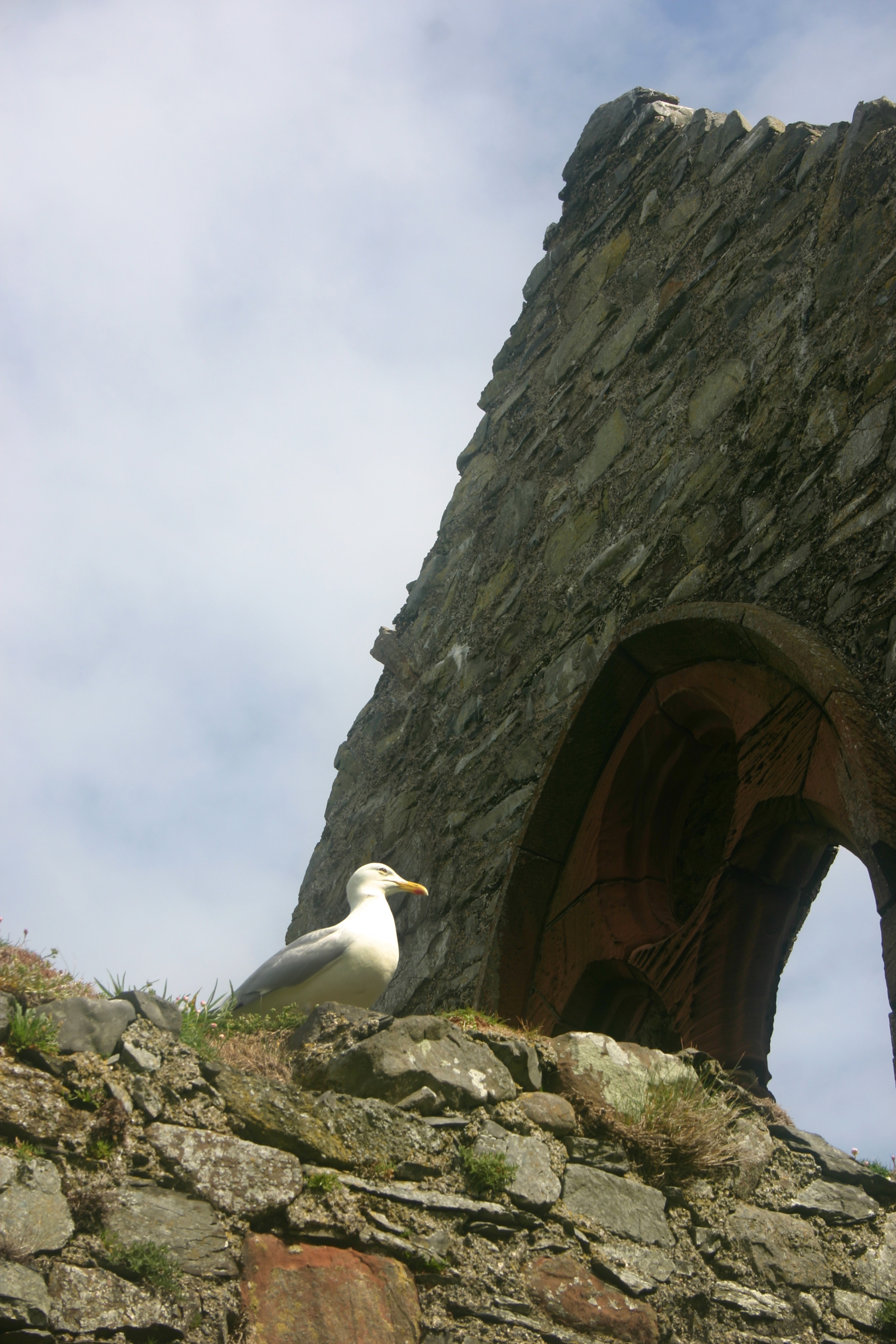 Mr. Seagull Sentry.