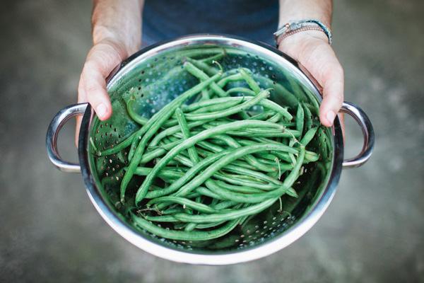 fresh harvest-242.jpg