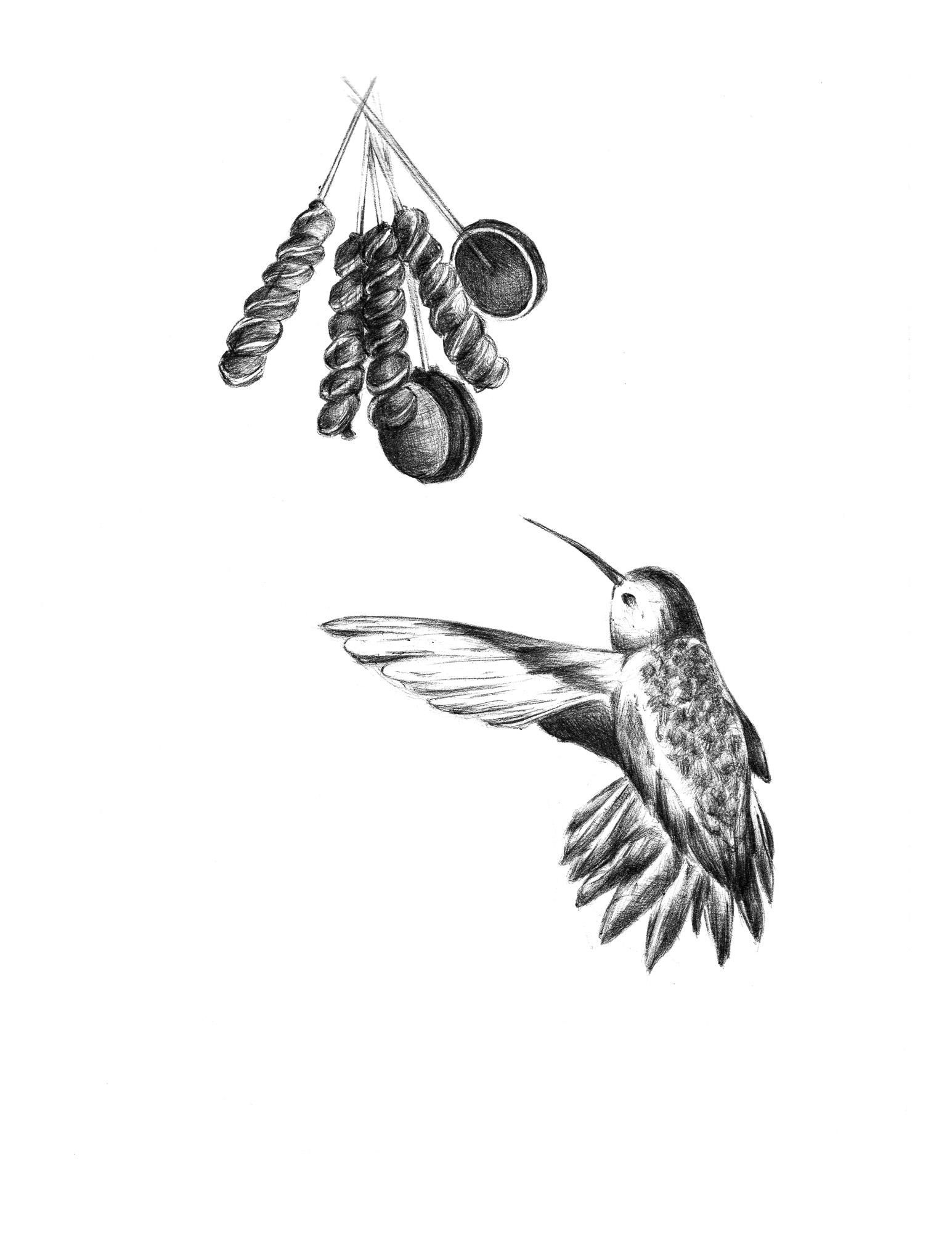 hummingbirddrawing.jpg