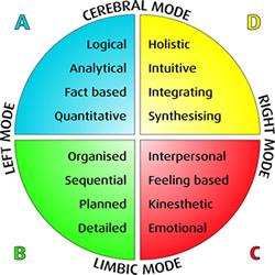 The Herrmann Whole Brain ModeTM