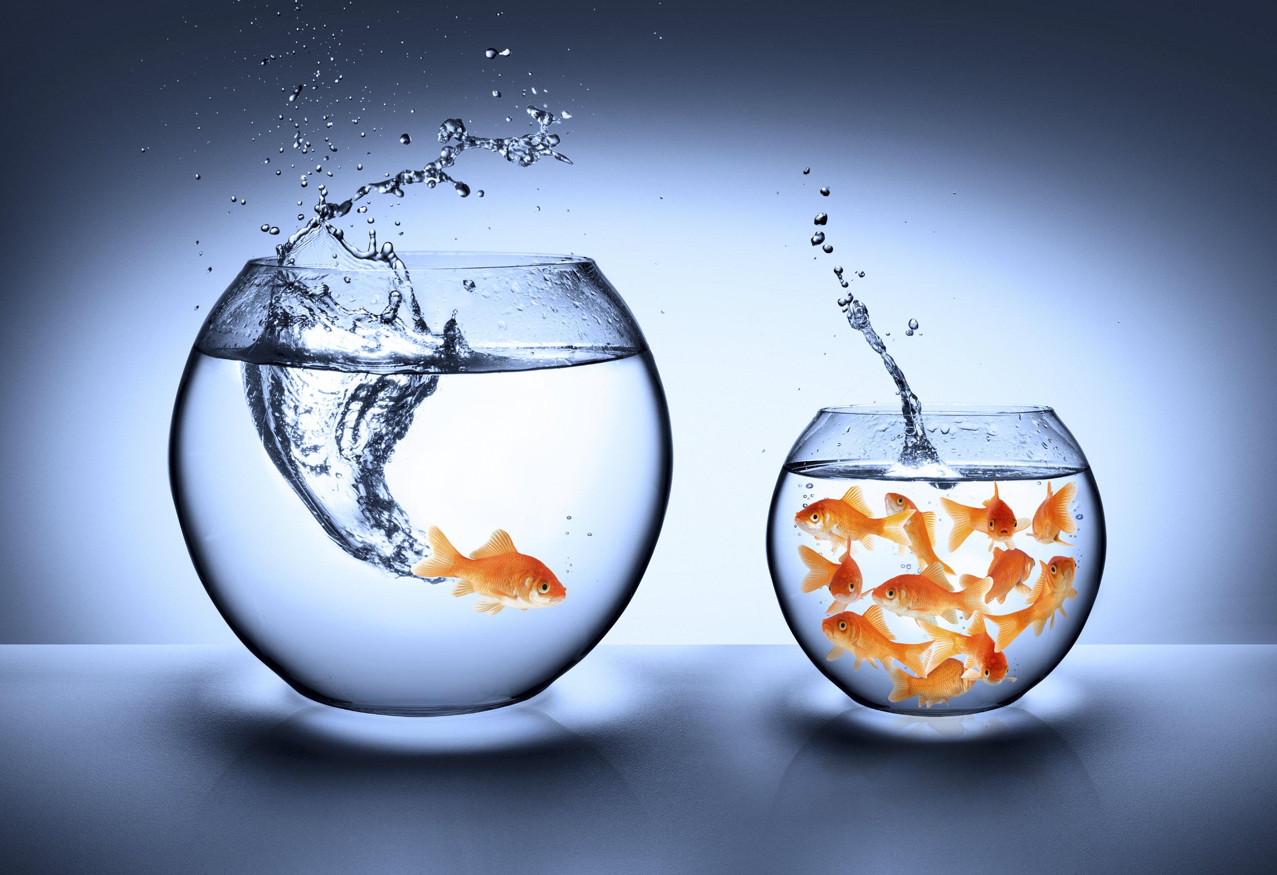 Fish-Outta-School.jpg