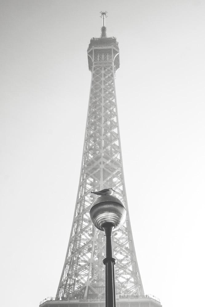 paris004.jpg