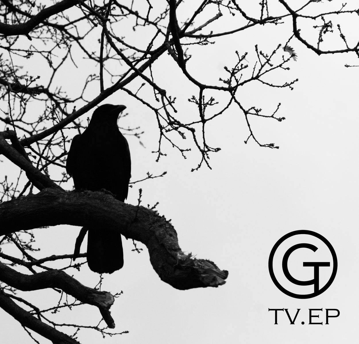birds treee.jpg