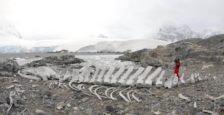 Antarctica_2007_1762a_14_verkleind.jpg