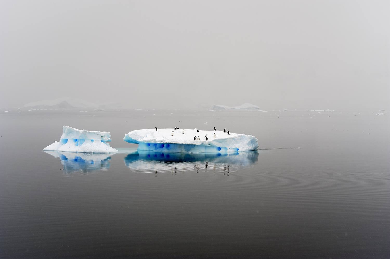 antarctica2008_0922b_31_verkleind.jpg