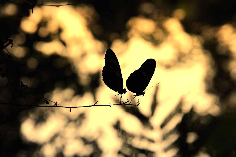 surinam2010_1508thijsheslenfeldA_122_verkleind.jpg
