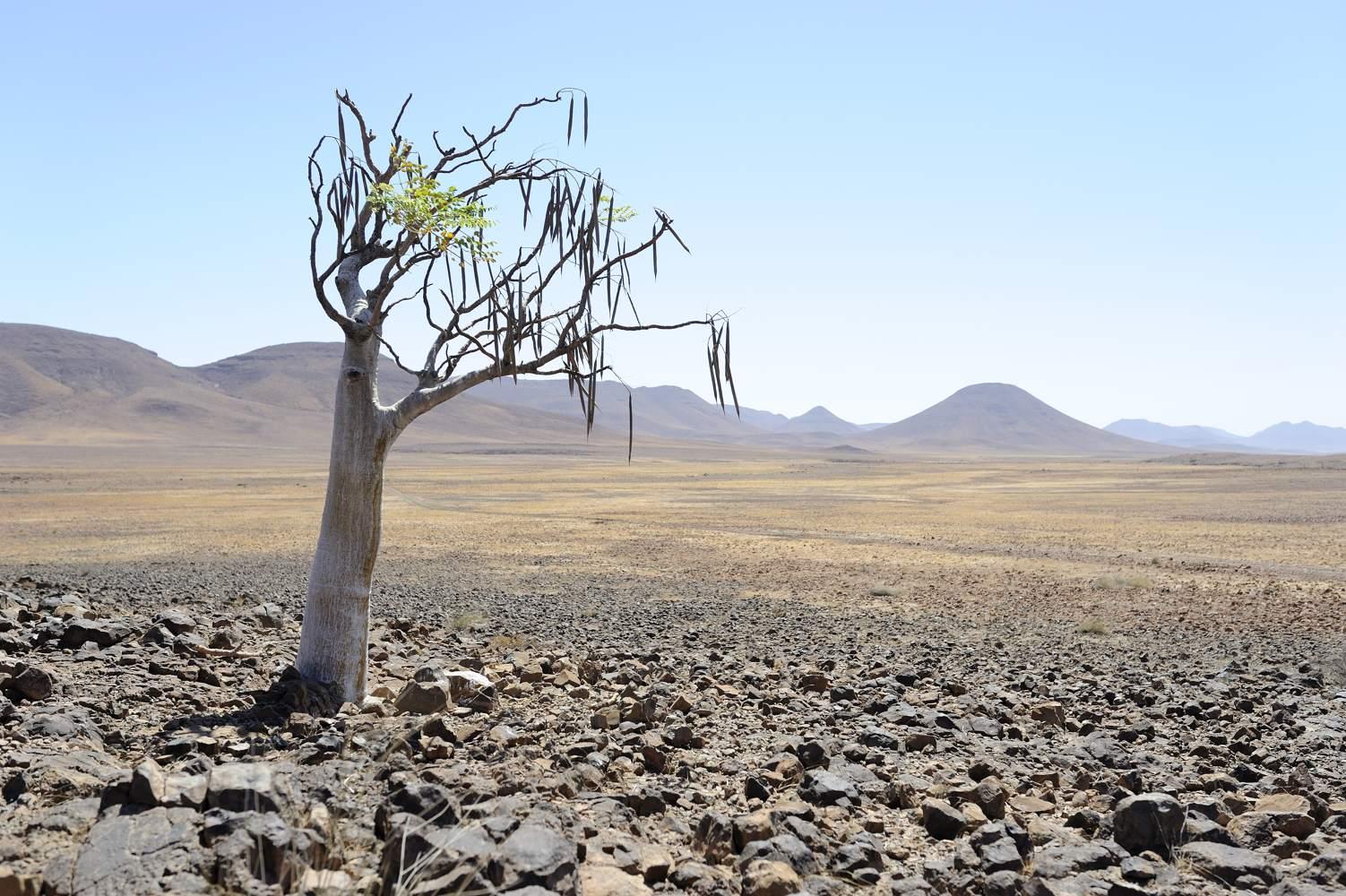 thijsheslenfeld_416_namibia.jpg