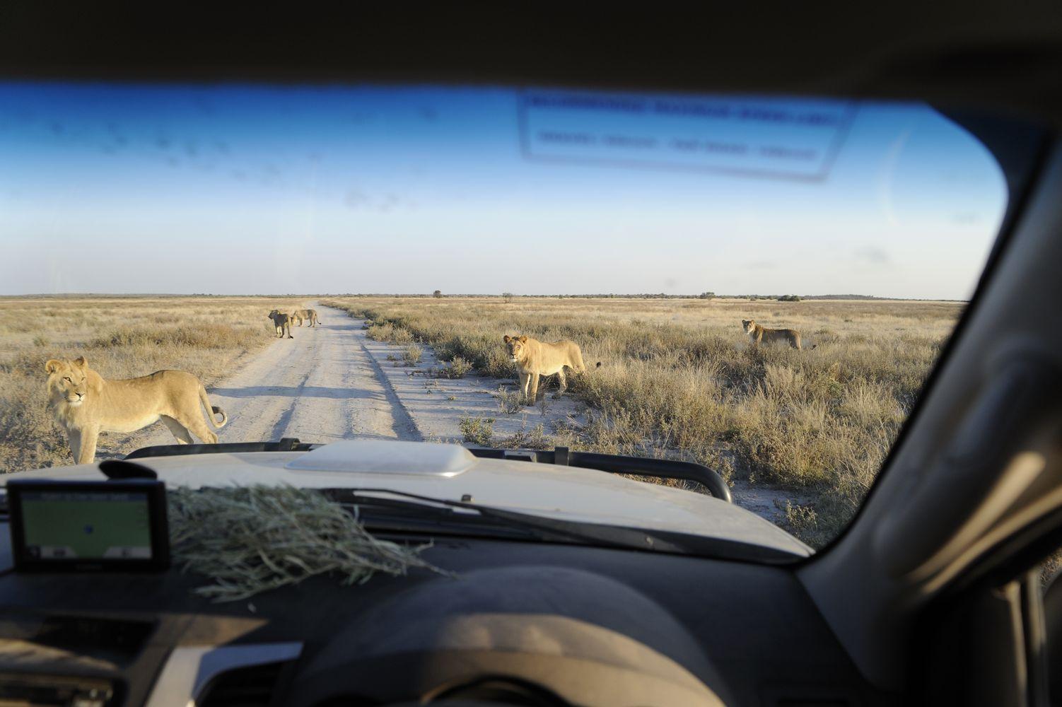 namibia2014-0662-thijsheslenfeldA_40_verkleind.jpg