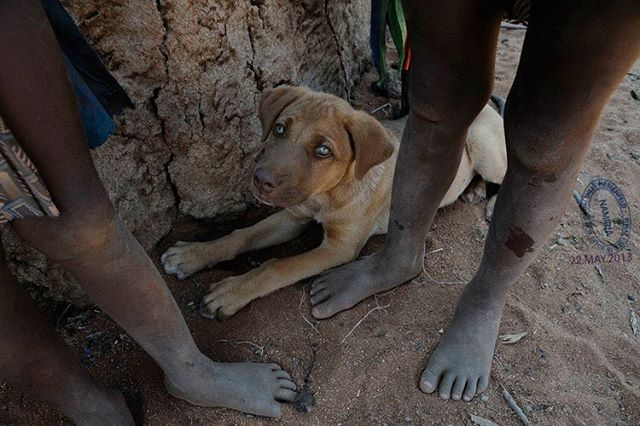 Whenever I visit a #himba village in the #desert in #namibia I will encounter their #dogs. It is my experience that these are practically always very friendly and trustworthy animals, so I tend to ignore the typical advice from european health officials to stay away from them, since they might carry #rabies. #namibia #kaokoland #himba #opuwo #pets