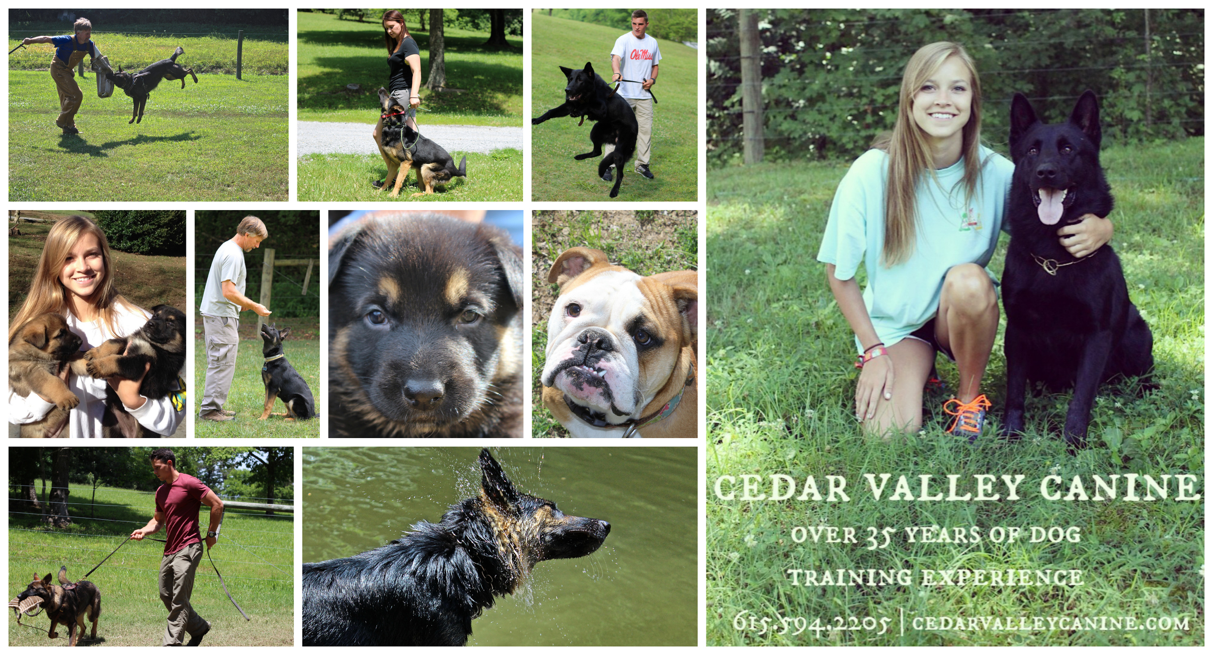 This is Cedar Valley Canine