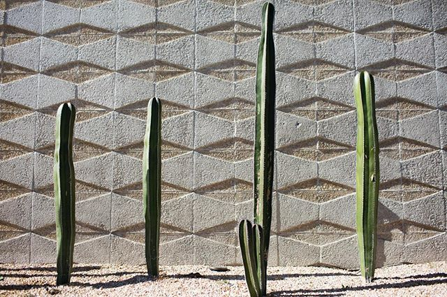 #PalmSprings #textures // Lots of time to flip through the back catalog right now