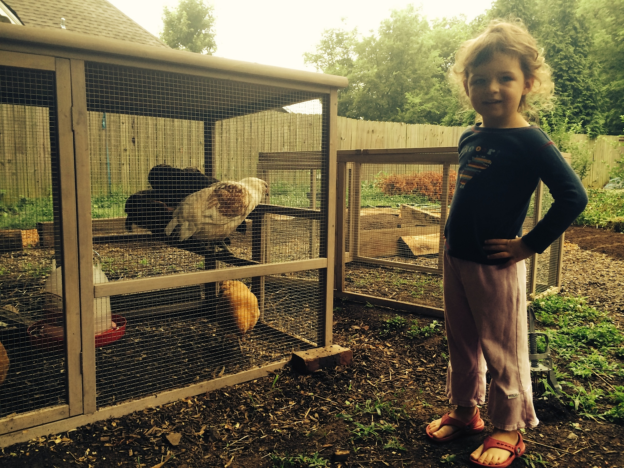 Starting early, Susannah's daughter poses with the chickens.