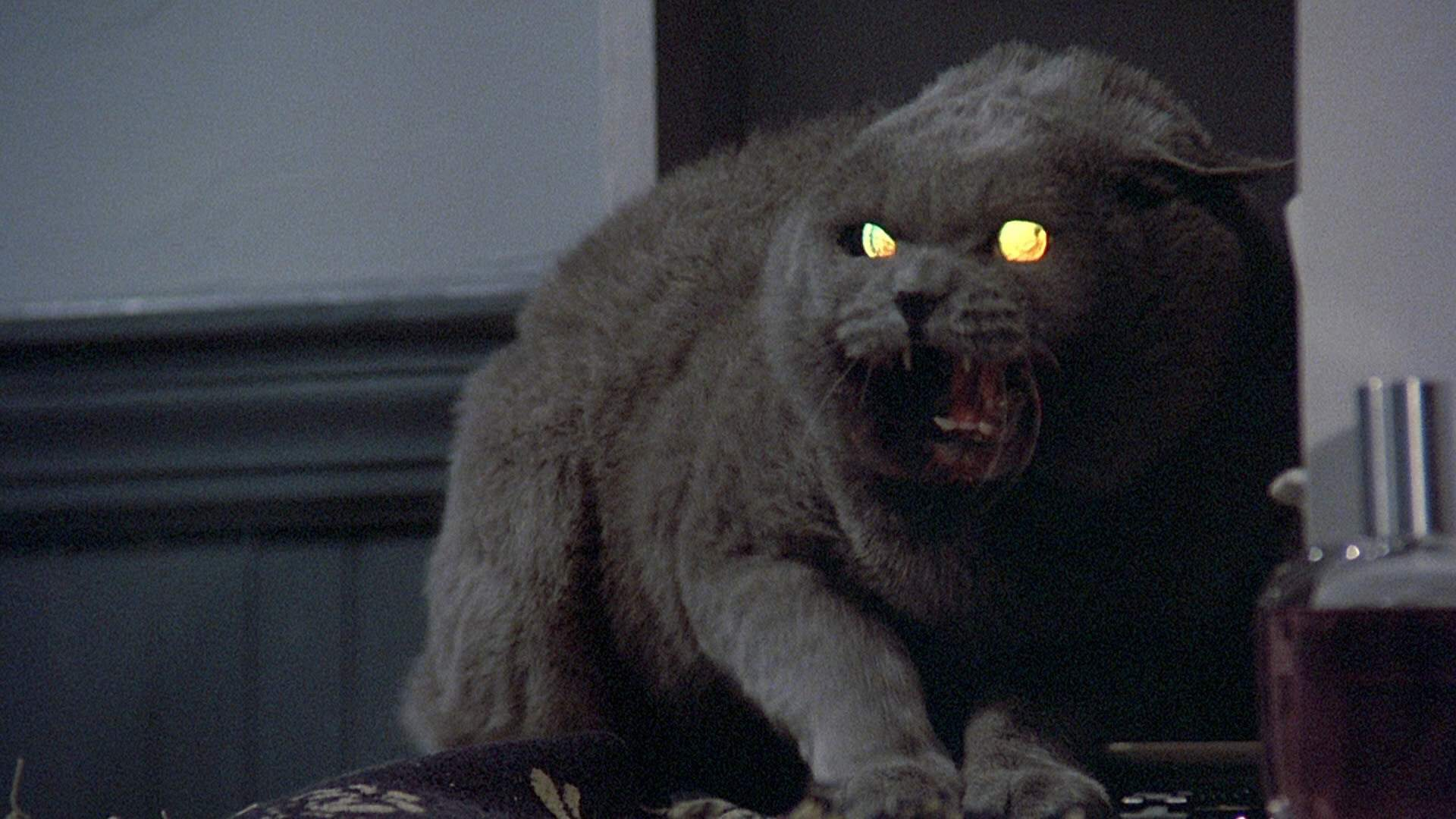 the-writer-of-the-pet-sematary-remake-says-it-will-be-scariest-stephen-king-movies-ever-social.jpg