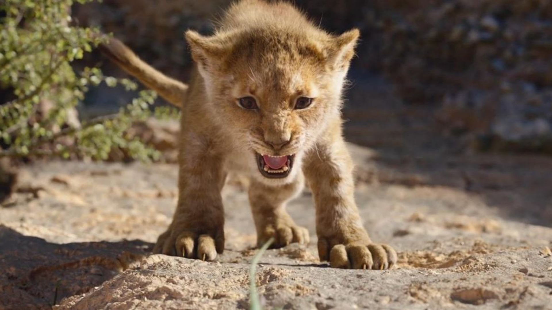 New Clips For The Lion King Include Circle Of Life Find