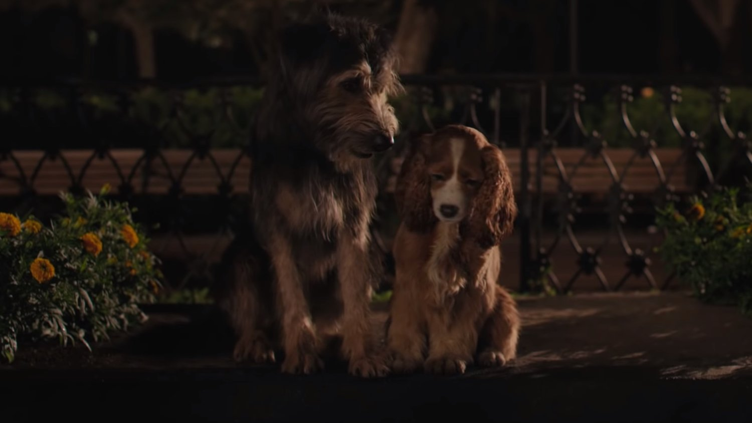 Disney S Live Action Lady And The Tramp Film Shooting With Real Dogs Geektyrant
