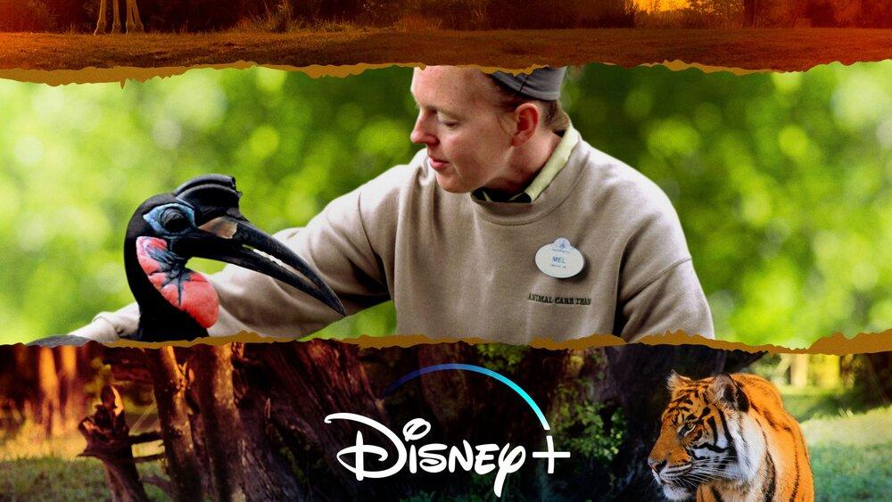 Get Ready to Explore the Animal Kingdom in MAGIC OF DISNEY'S ANIMAL KINGDOM