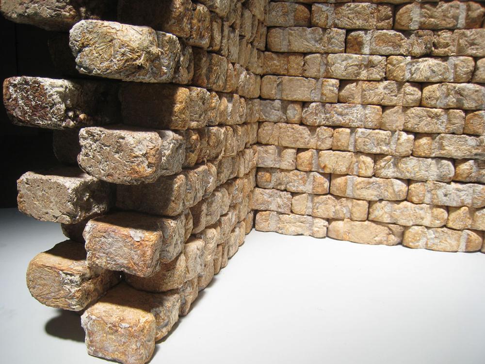 wall_of_fung.jpg