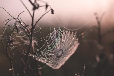 cobweb-1853051_1920.jpg