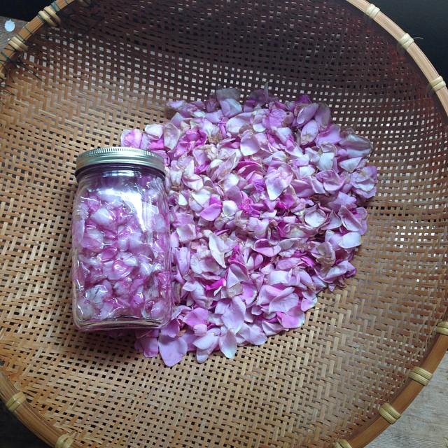 wild-rose-oil.jpg