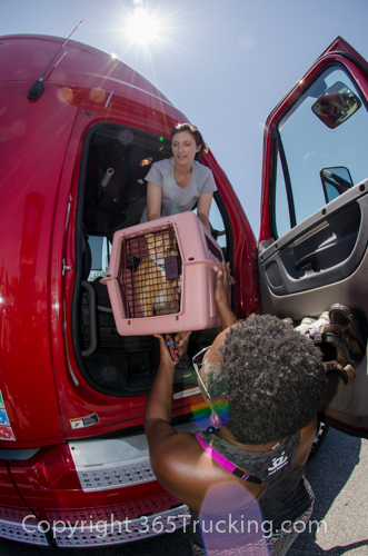 CLICK ON THIS IMAGE TO REVIEW AND DOWNLOAD ANY OF THE PET TRANSPORT PICTURES