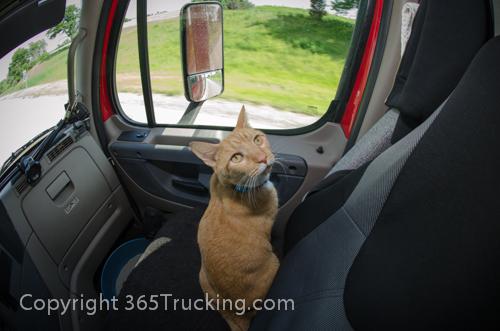 Pet_Transport_Zorro_Pauly_060614-172.jpg