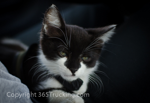 Pet_Transport_Zorro_Pauly_060614-66.jpg