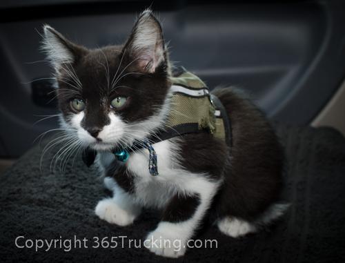 Pet_Transport_Zorro_Pauly_060614-116.jpg