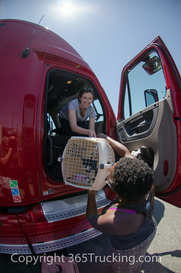 CLICK ON THIS IMAGE TO VIEW AND DOWNLOAD ANY OF THE PET TRANSPORT PICTURES.