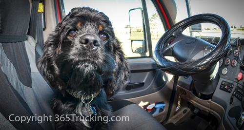 Click Images for FREE Downloads and view all Pet Transports.