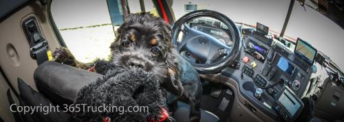Clickpicturestoviewall Pet Transport images