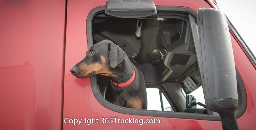 Pet_Transport_111914-143.jpg