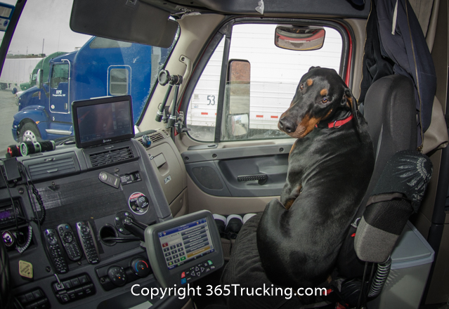 Pet_Transport_111914-180.jpg