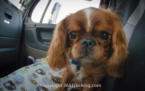 Pet_Transport_101114_Charlie-31.jpg