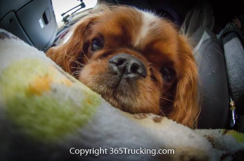 Pet_Transport_101114_Charlie-71.jpg