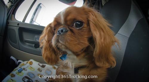 Pet_Transport_101114_Charlie-41.jpg